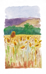 sunflowers-in-cascaval-1999